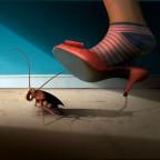 Как избавиться от тараканов самостоятельно: от народных методов до современной химии