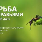 уничтожение муравьев в спб, борьба с муравьями на дачном участке, борьба с муравьями в квартире, вывести муравьев в квартире, как бороться с муравьями