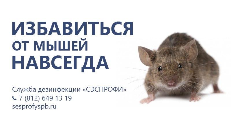 Услуги СЭС: дезинсекция, дезинфекция, дератизация в СПб