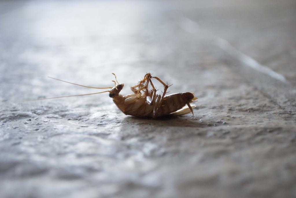 таракан, дезинсекция спб, потравить тараканов в квартире, уничтожение тараканов, травление тараканов, борьба с насекомыми, как вывести тараканов