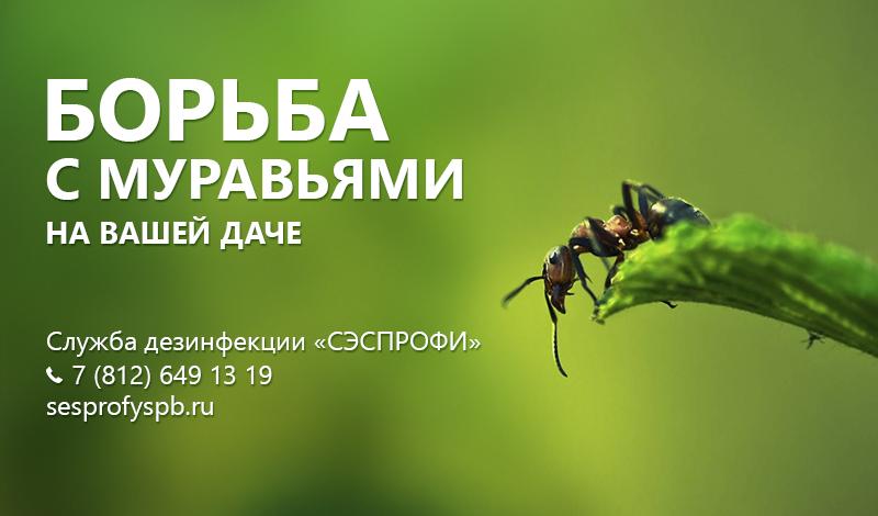 обработка от муравьев