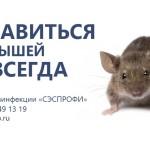 уничтожение мышей спб, ератизация спб, как вывести мышей, борьба с мышами в частном доме, борьба с грызунами, как избавится от мышей, как избавиться от запаха мышей